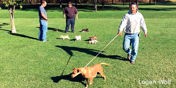 paseando a los perros salvados